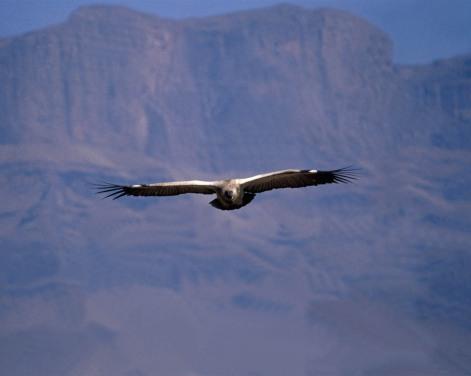 bird-27.jpg